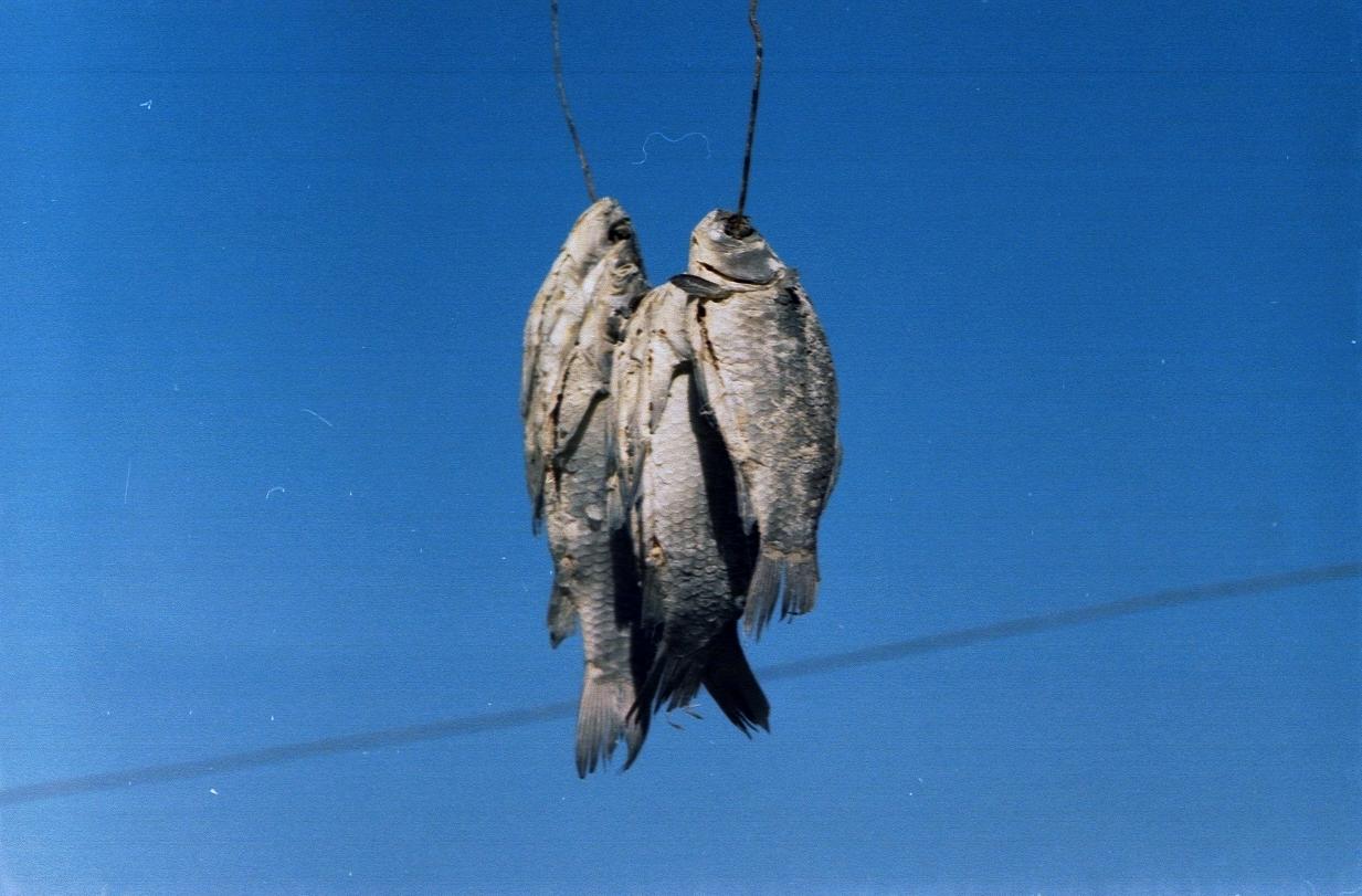 6. Сушеная рыба Вобла, бычки, корюшка — для русского человека это не просто закуска к пиву, это ри_т