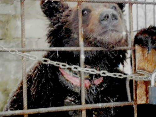 луганский медведь