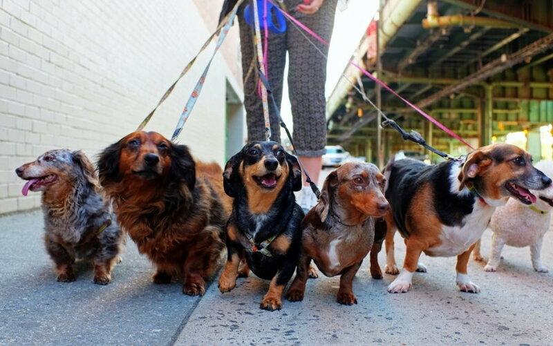 Специалист по выгулу собак