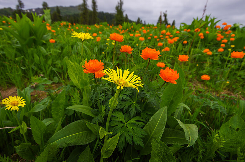 Разноцветье в Ергаках