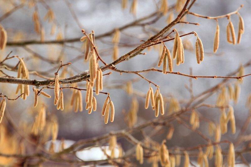 Новый наряд Весны