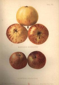 07. Коричное полосатое и Коричное ананасное