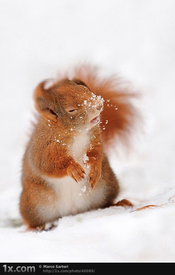 squirrel hit by snowball