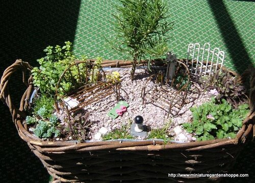 композиции из комнатных растений 2