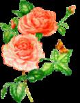 rosenrosa008.png