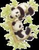В этом уроке я расскажу, как нарисовать таких симпатичных панд.