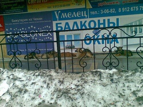Собаки в Ревде