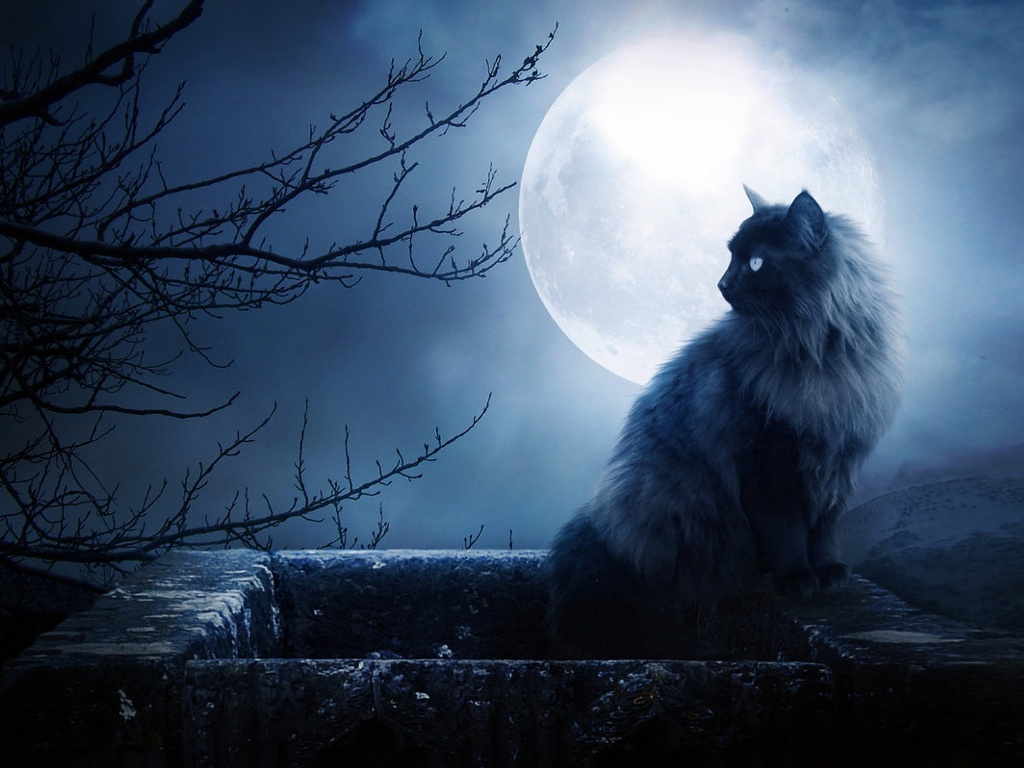 Картинки котов при луне
