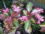 Красиво цветущие декоративные кустарники