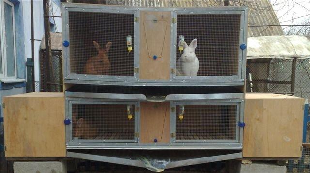 Основи і плюси утримання кролів у клітках господарство.