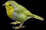 bird(2).png