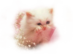Кошки 5 0_52030_2f1adb7c_S