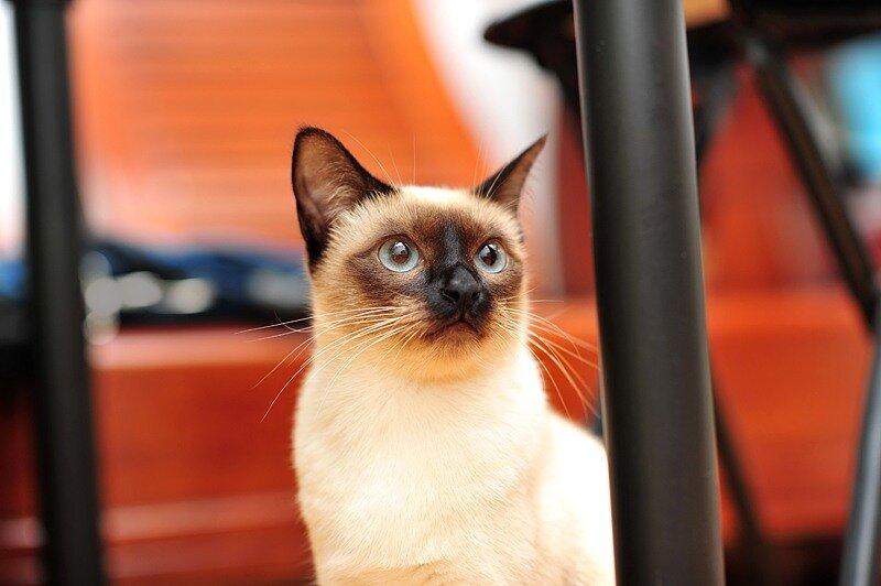 Кошки  0_5290e_d237b1f4_XL