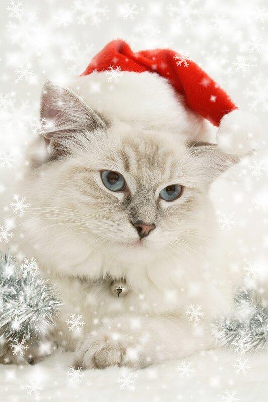 snowflake santa kitty
