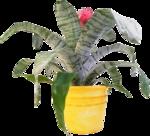 Домашние цветы 44