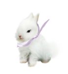 Lily_easter_el2.png