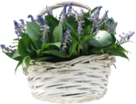 ial_sng_basket2.png