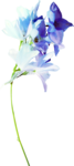ldavi-shadowedflowers-delphinium1.png