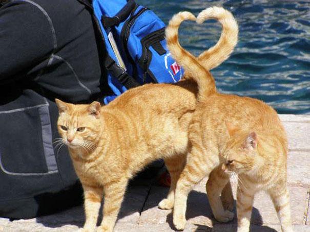 сердце из кошачьих хвостов