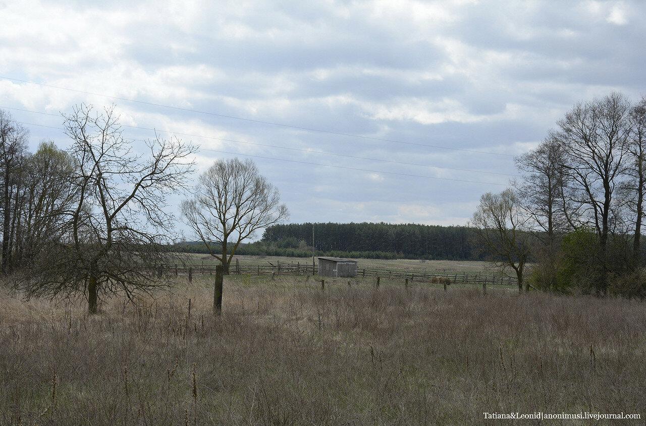 Деревня Кривча. Брагинский район