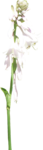 ial_elb_flower1.png