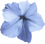 ial_elb_flower5.png