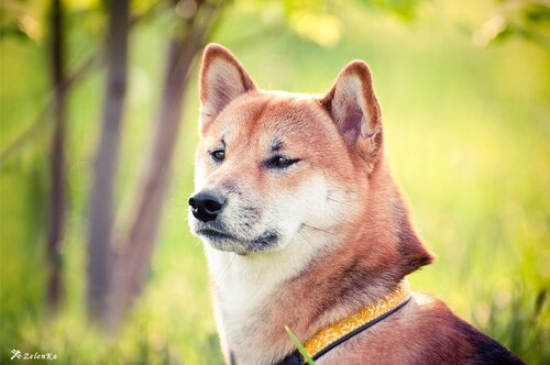 пофотографирую Ваших собак! 0_108f7a_5ee3dd18_L
