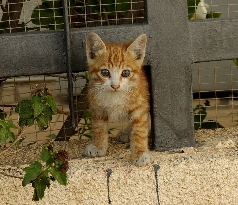 Маленький котейка