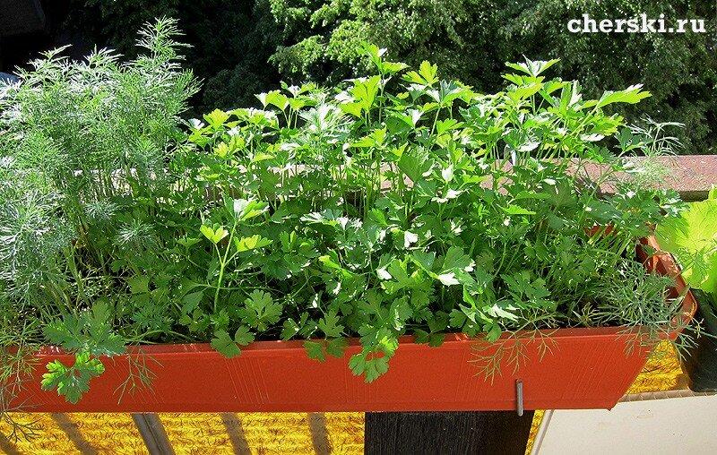 Какие цветы выращивать на балконе. обсуждение на liveinterne.
