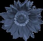 «синяя луна»  0_6498c_e3c4fea7_S