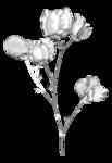 kwiat4.png