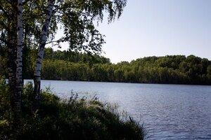 Берёзы у озера