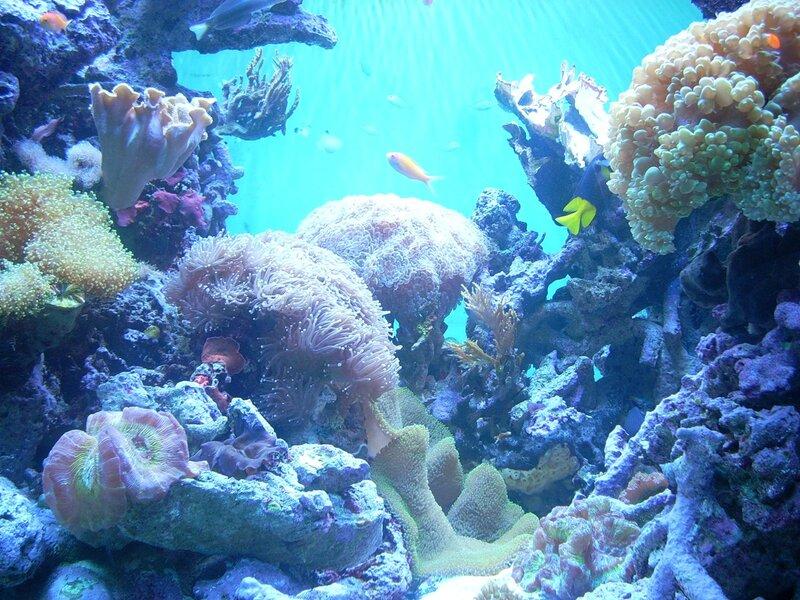 Подводный мир-Kораллы 12458