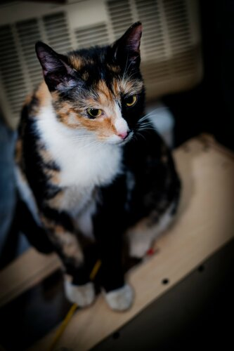 Отдам в дар: Британские котята в.