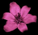 BCD_FloweryDay_el (21).png