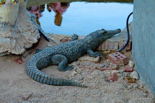 египет, крокодил