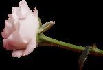«A woman in love by Cajoline-Scrap» 0_7f81e_f347775b_S