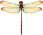 jsn_studioNDC_round2_am_dragonfly.png