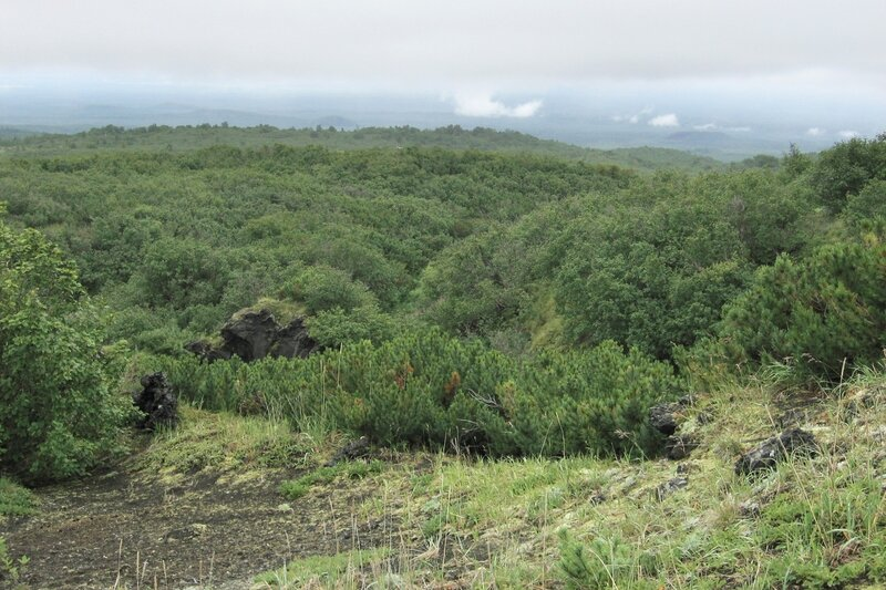 Заросли кедрового стланика, Камчатка