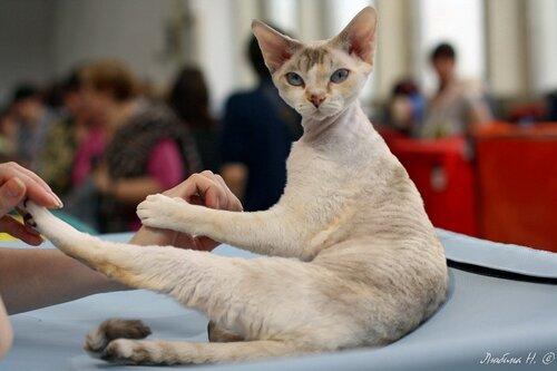 выставка кошек, ВДНХ