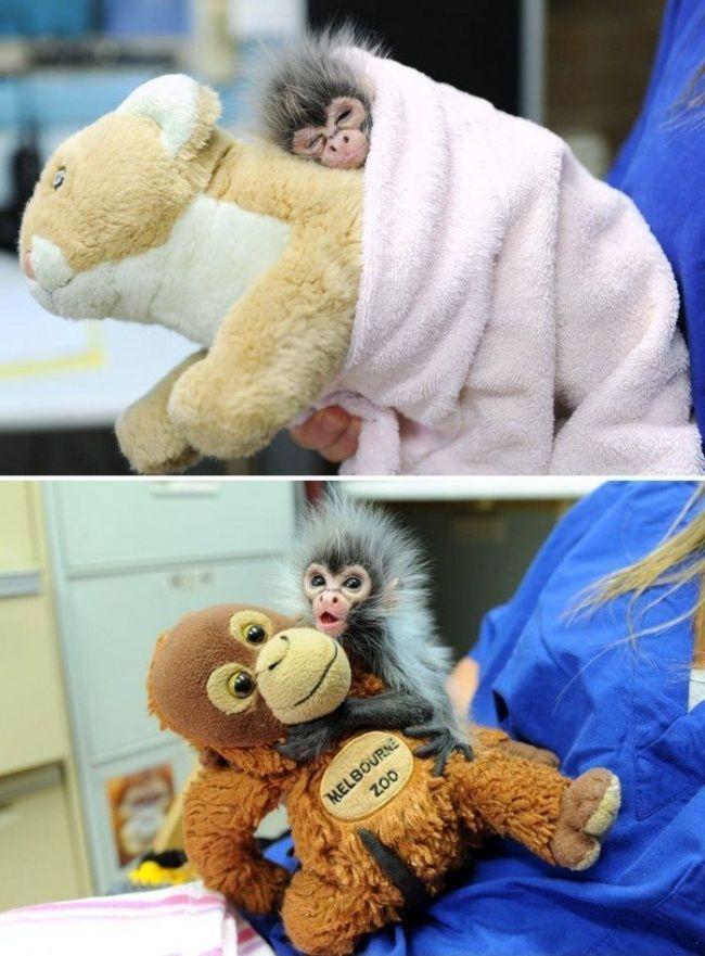 лучшие друзья обезьянки