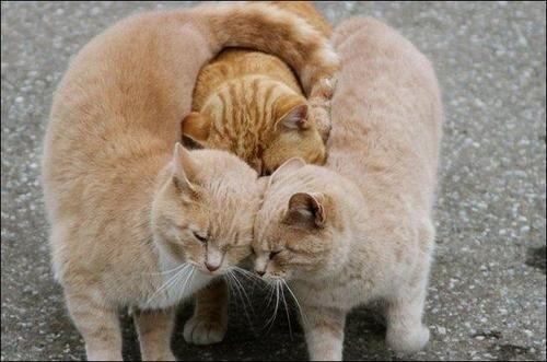 кот и кошки