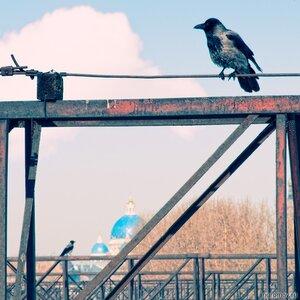 Две вороны (ворона, птица, Троице-Измайловский собор)