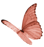 DBV_FlyB_element (10).png