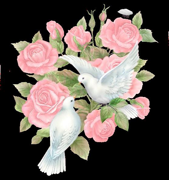 Картинки по запросу картинки клипарт голуби