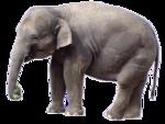 африка животные 0_662fc_6bbf7630_S