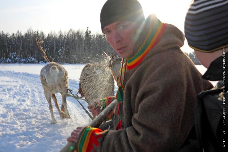 поездка на нартах, запряженных северными оленями