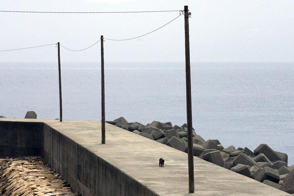 Aoshima, aka 'Cat Island'3_1280.jpg