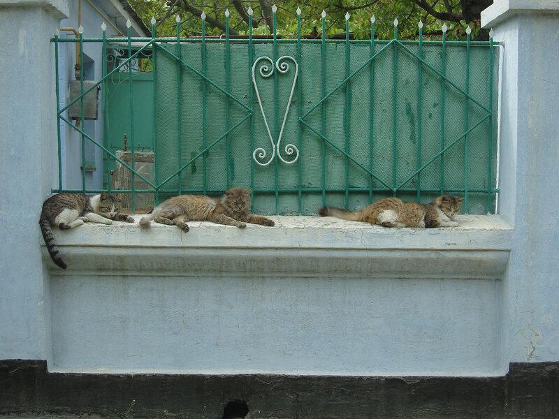 очередное скопление кошек -)