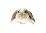 Lily_easter_el1.png